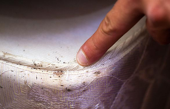 how to detect bed bugs early